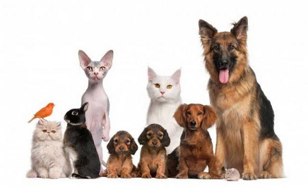 Налог на домашних животных в России 2020